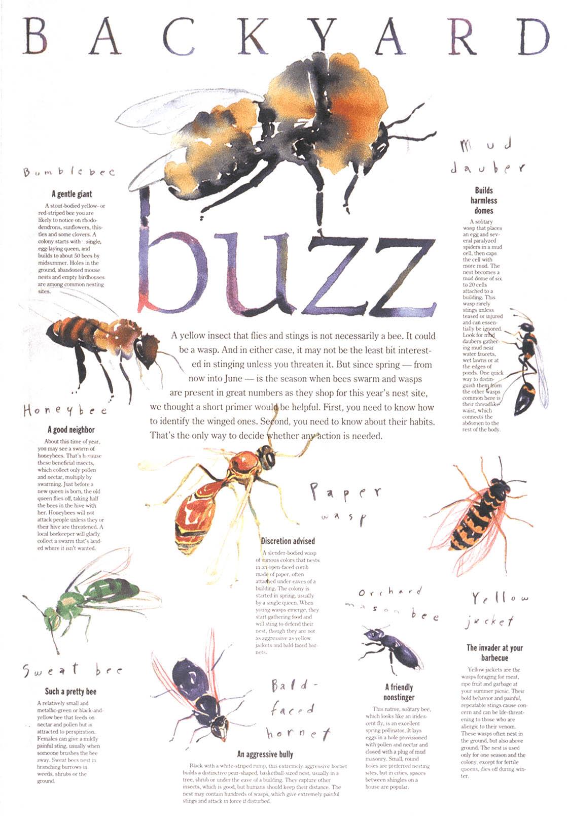 buzztype.jpg