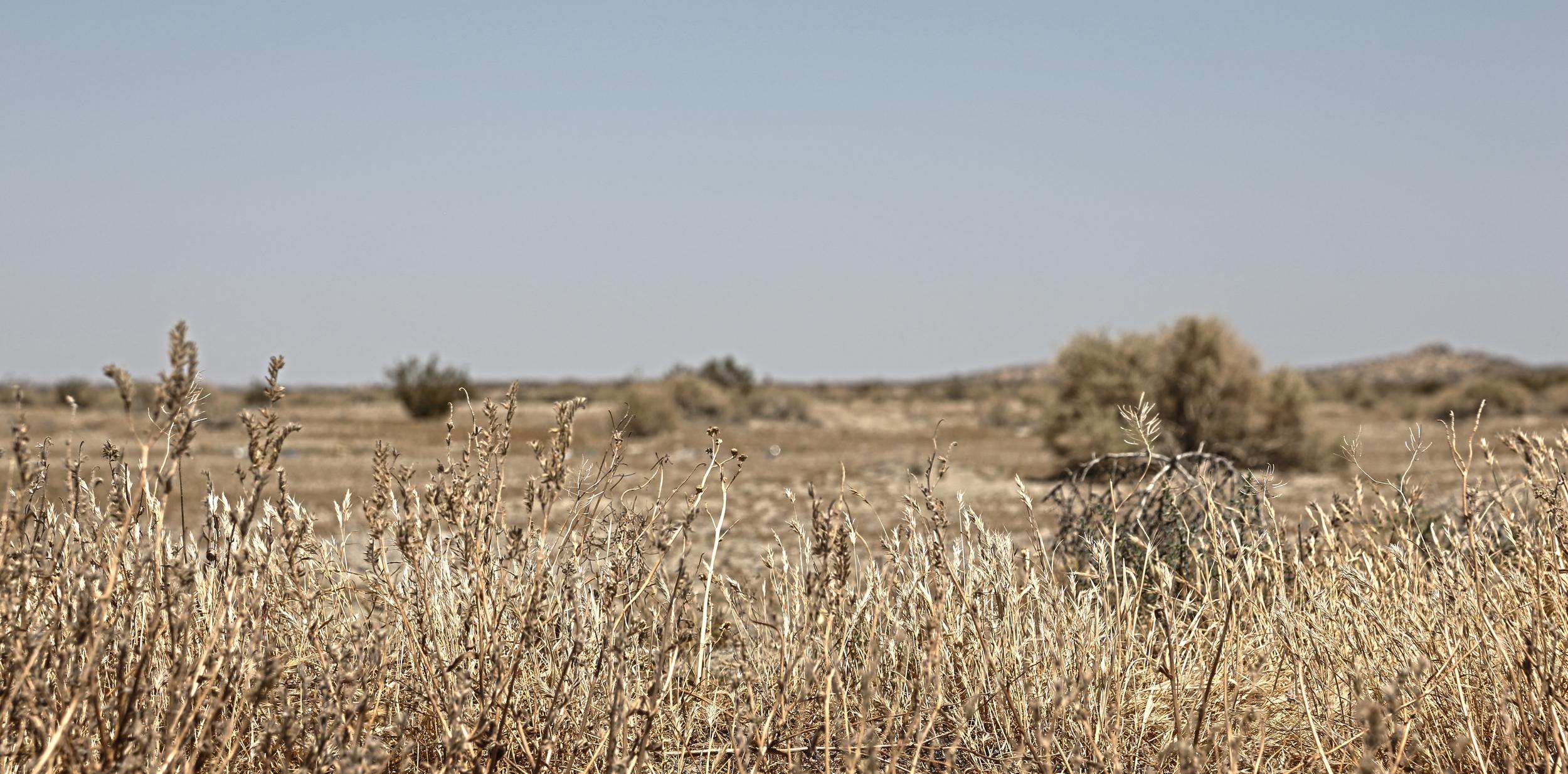 Desert Plains.jpg