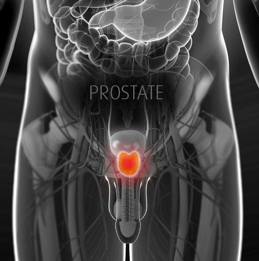 Expertise-Dr-J-Grummet_Male_Image_V2_prostate.png