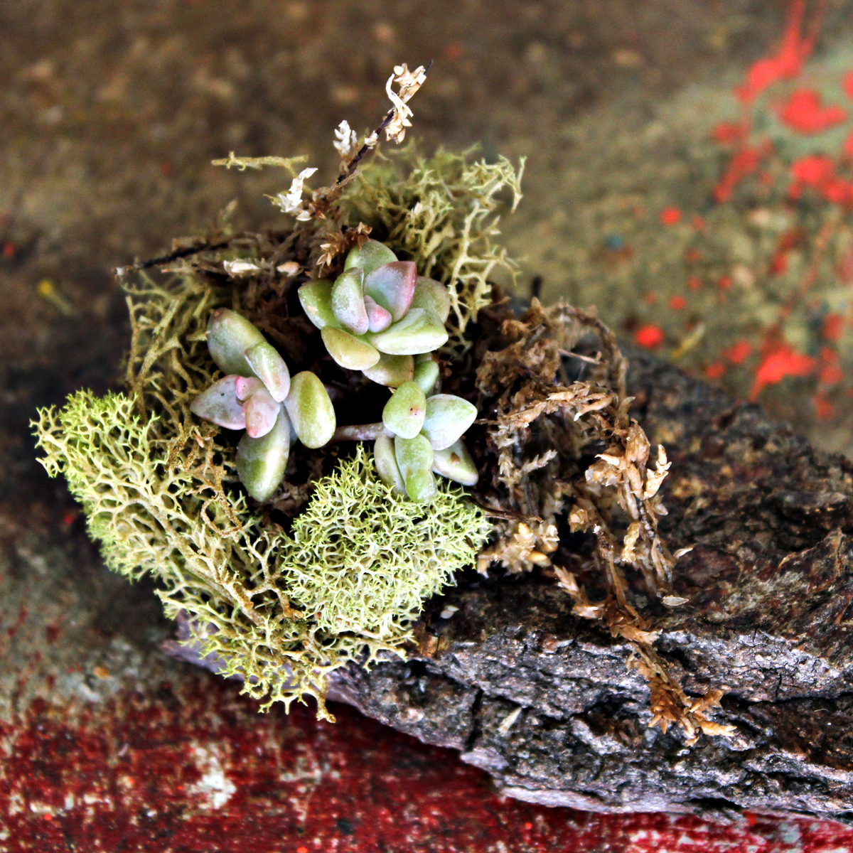 succulents on wood bark