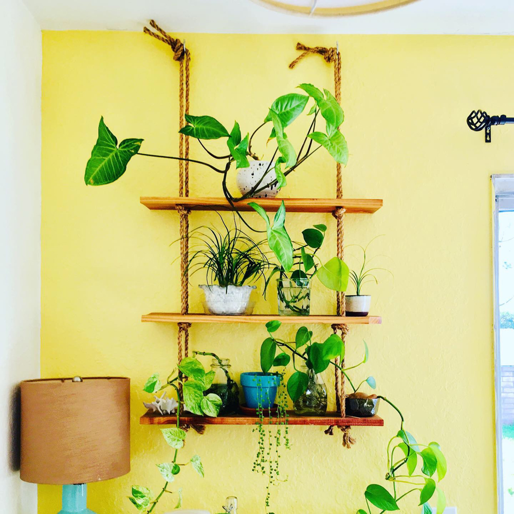 Just one shelf, in one corner , covered in plants.