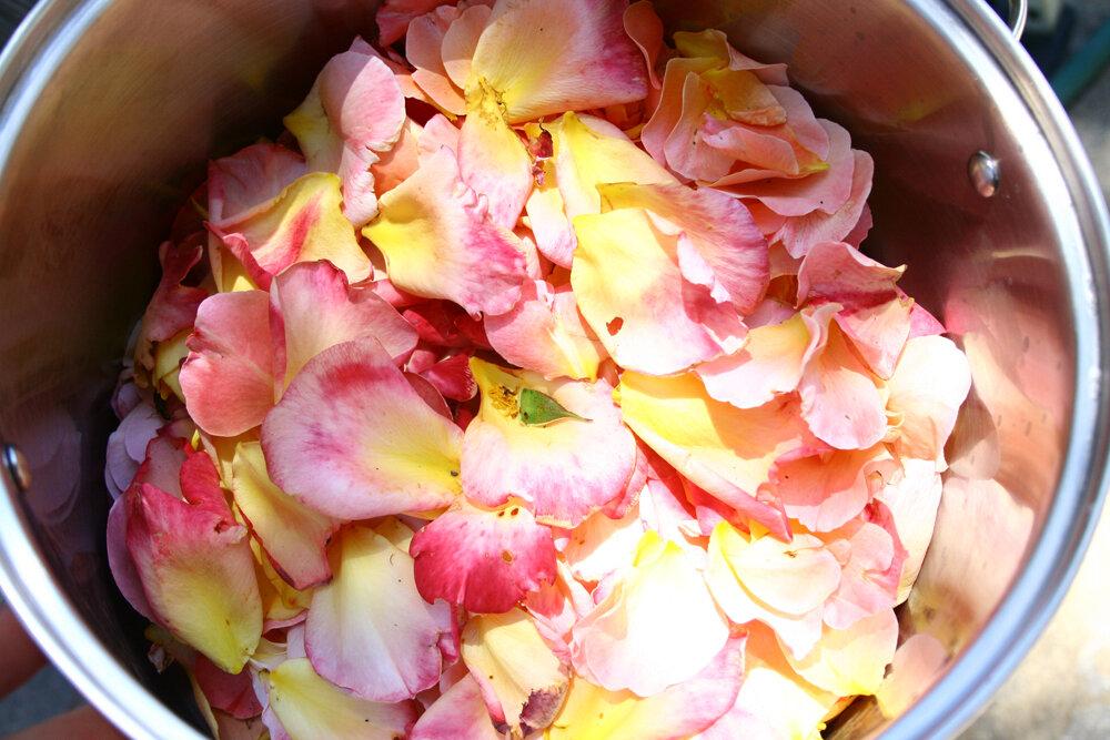 rosewater.freshpetals.JPG