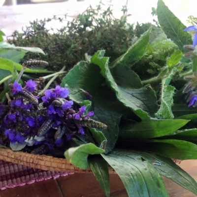 Fresh harvest herbs to use on the facial steam
