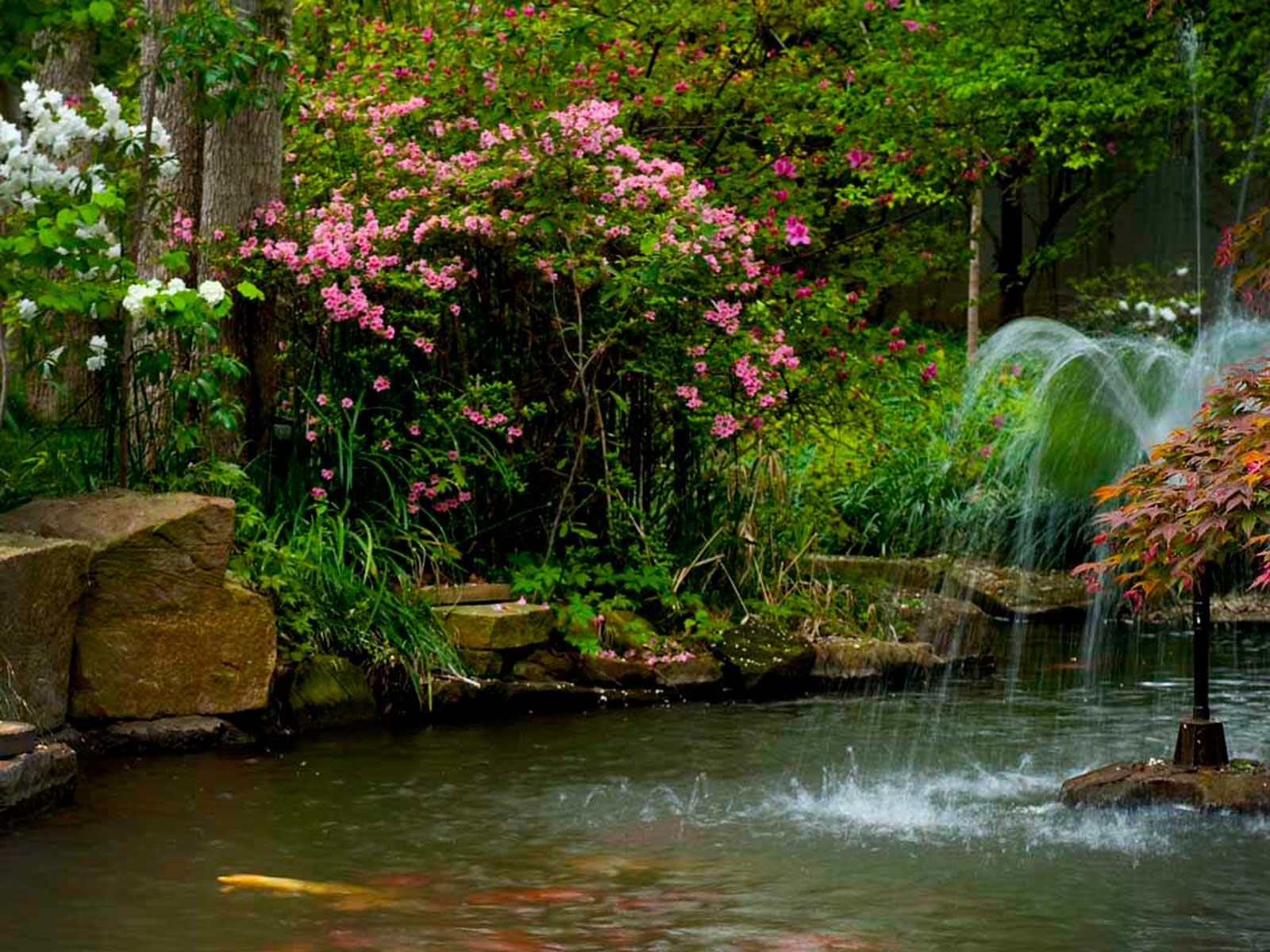 koi pond and natural water feature