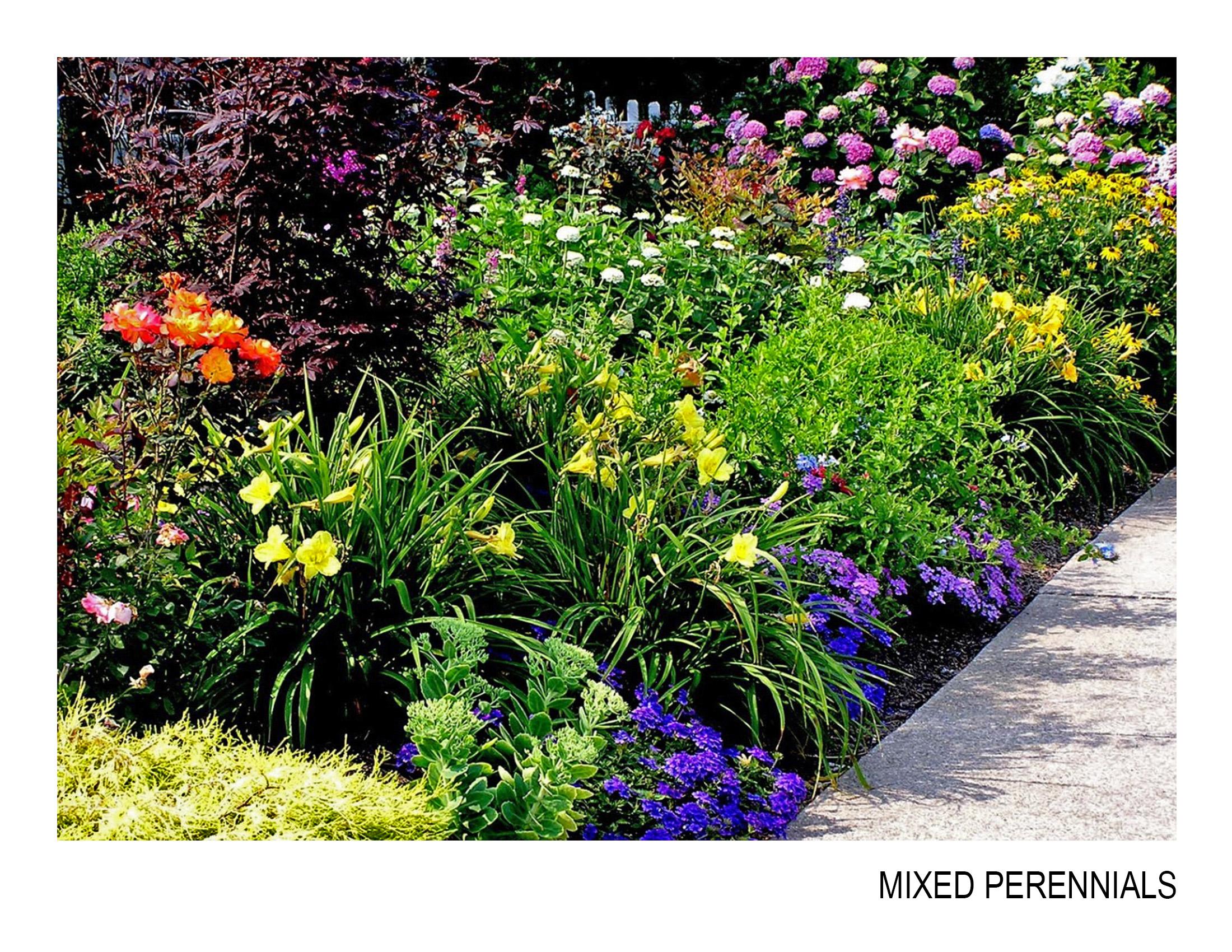mixed perennials.jpg