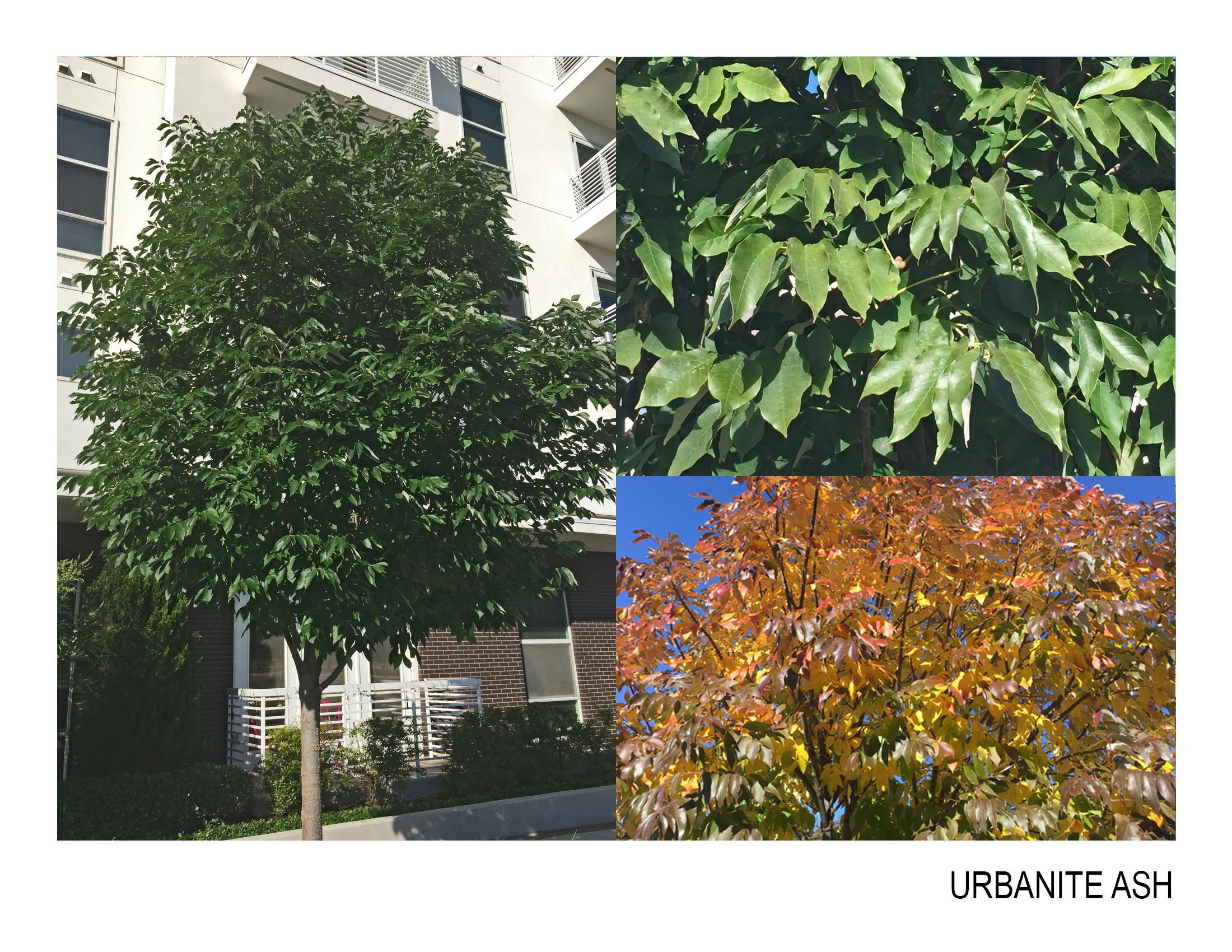 urbanite ash.jpg