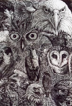 birds-of-prey.jpg