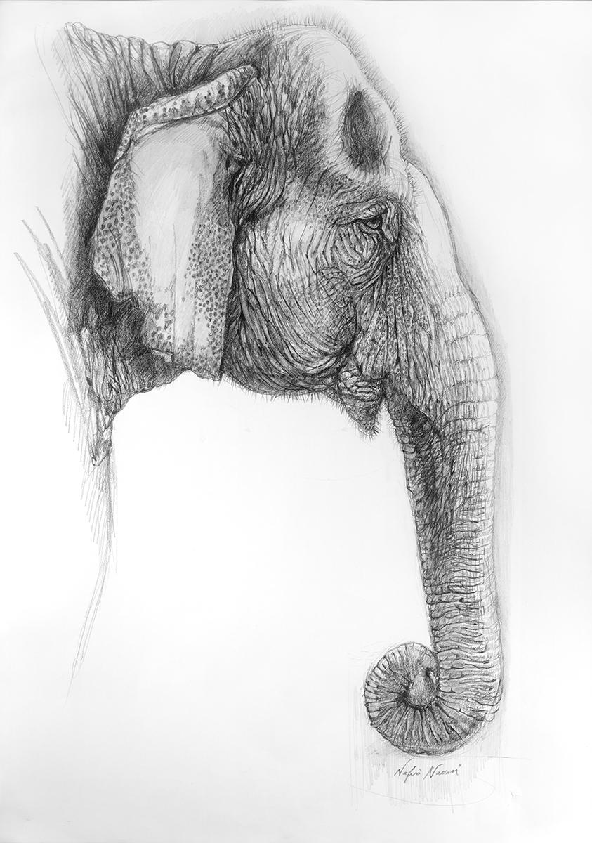 nafisa-elephant-4.jpg