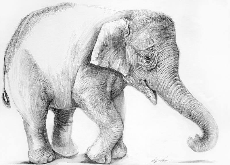 nafissa-elephant-5_0.jpg