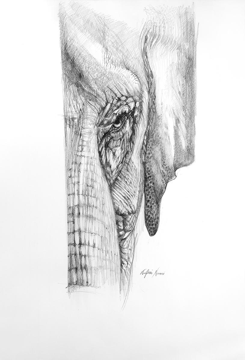 nafissa-elephant-5.jpg