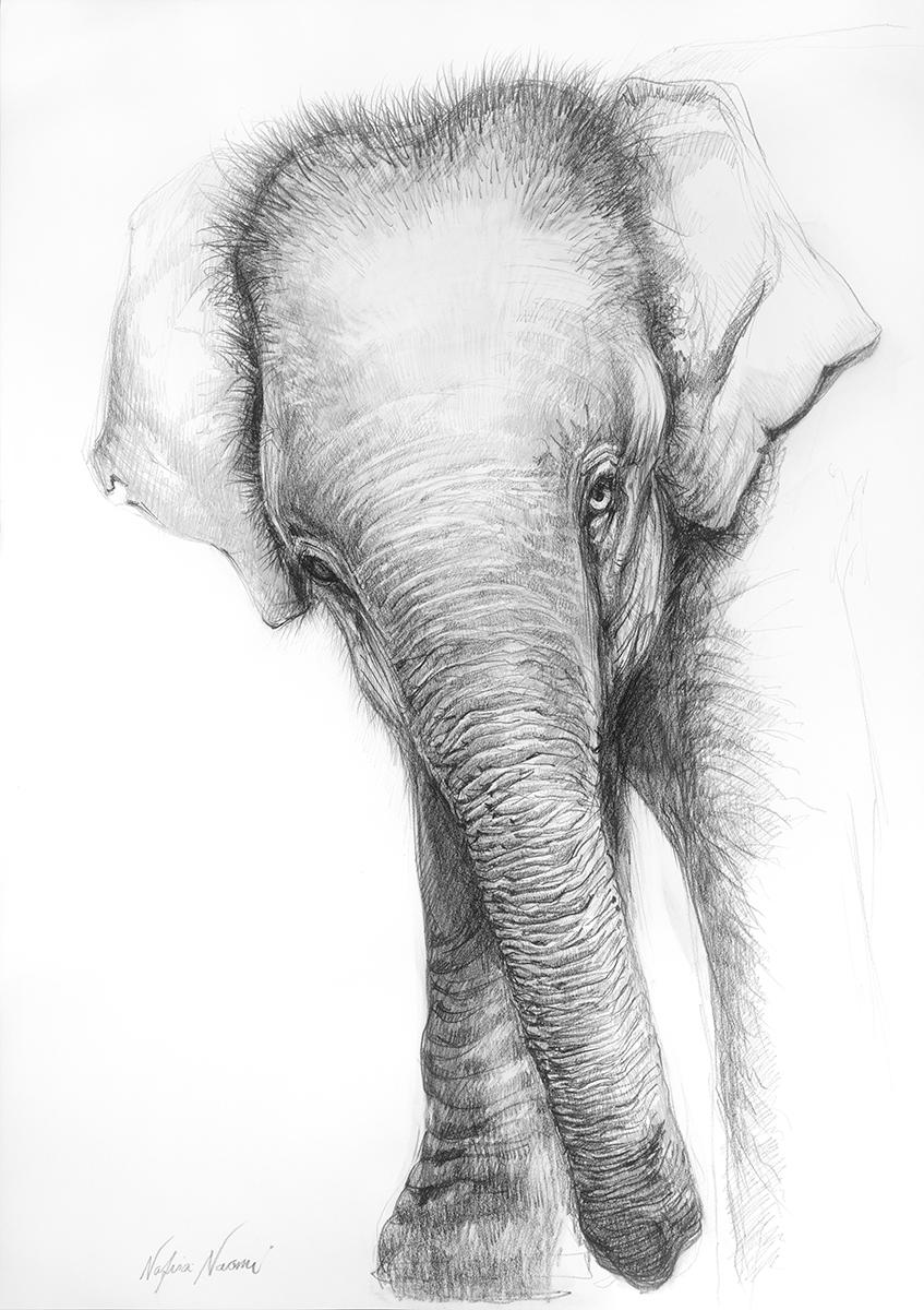 nafissa-elephant-6.jpg