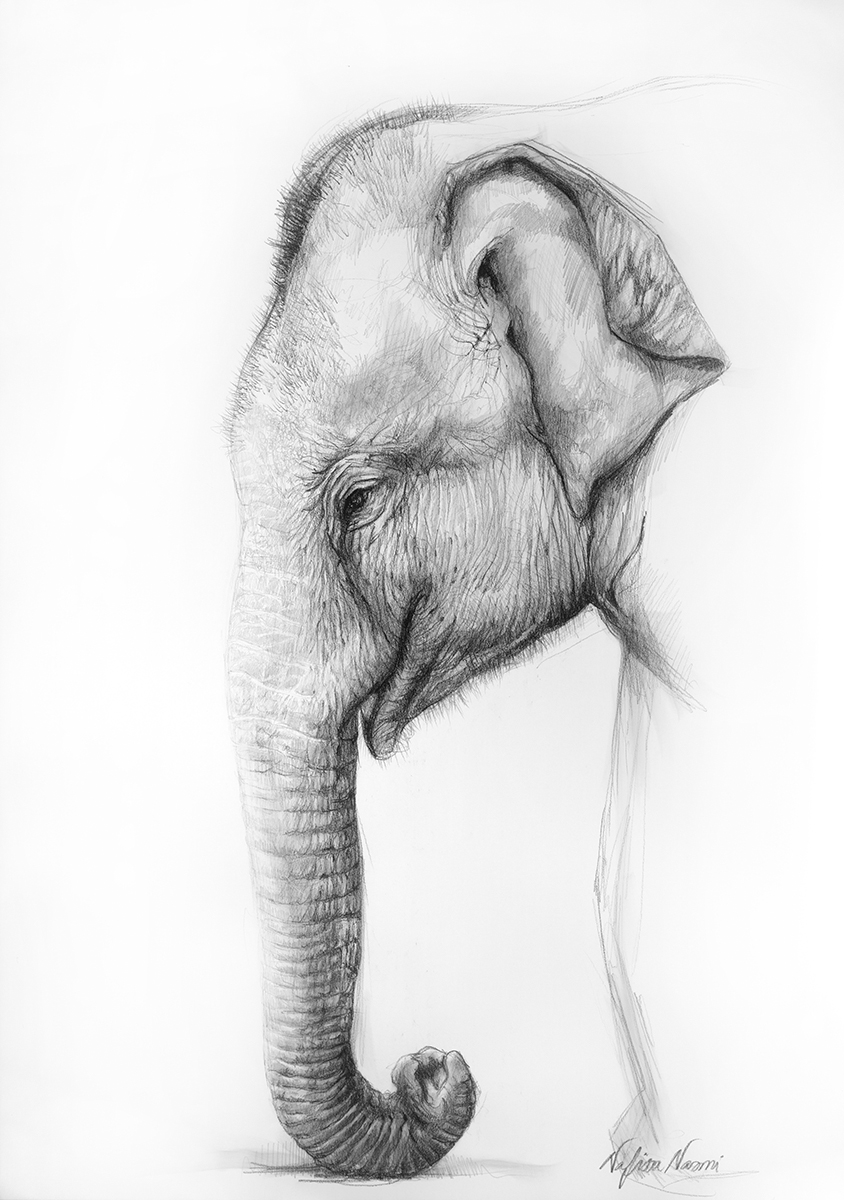 nafissa-elephant-9.jpg
