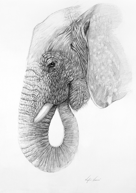 nafissa-elephant-12_0.jpg