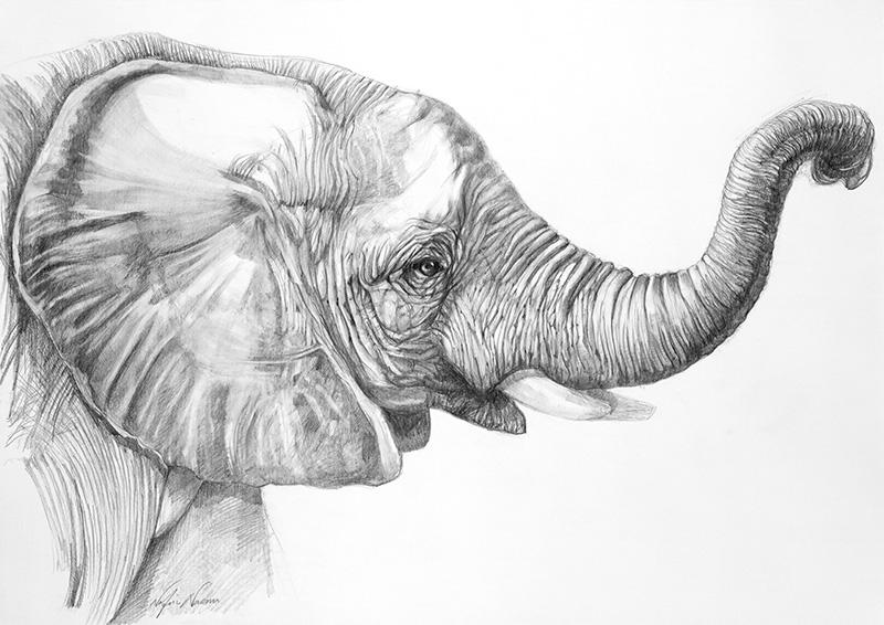 nafissa-elephant-13_0.jpg