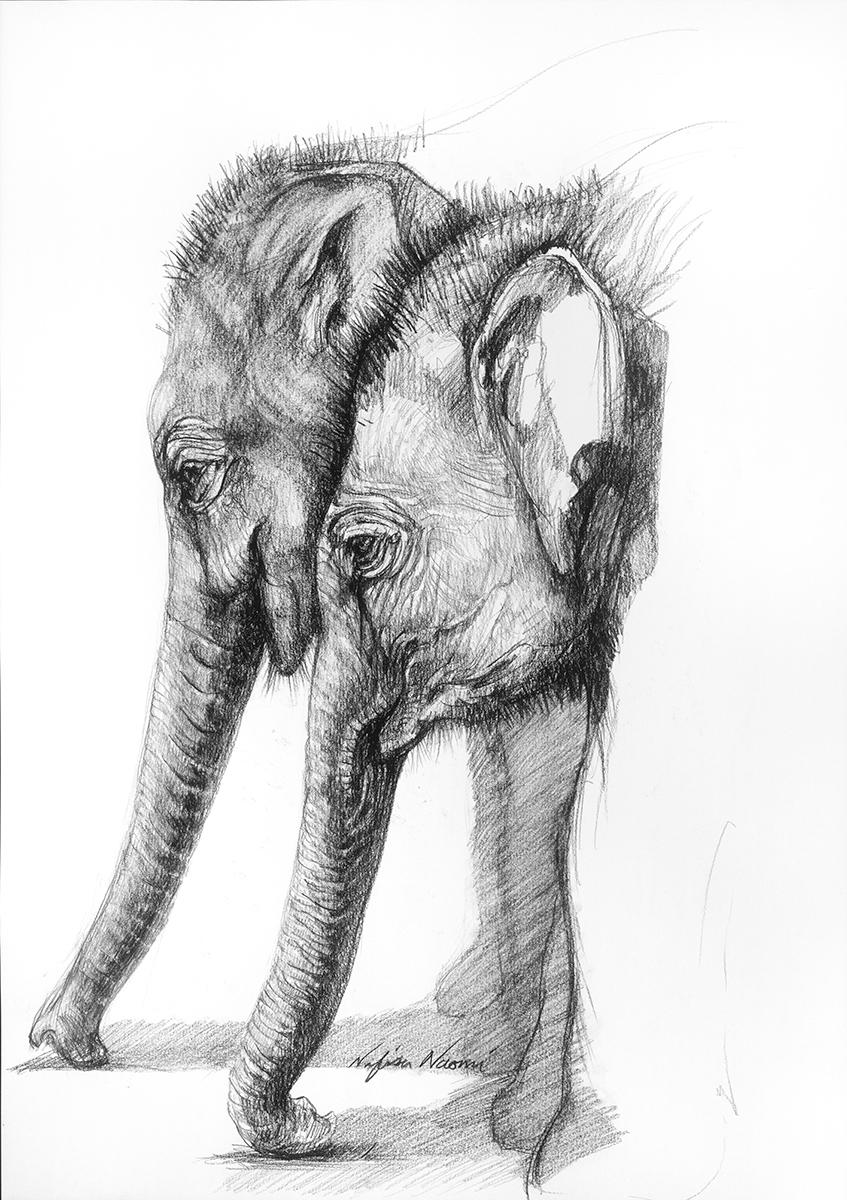 nafissa-elephant-14.jpg