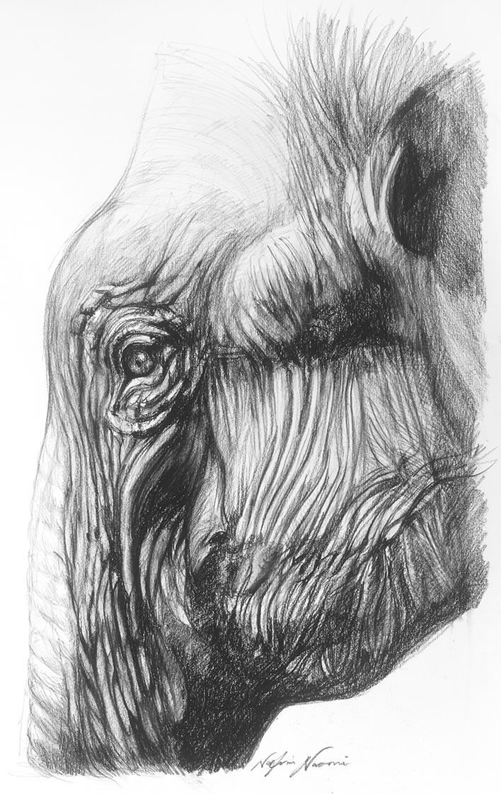 nafissa-elephant-16.jpg