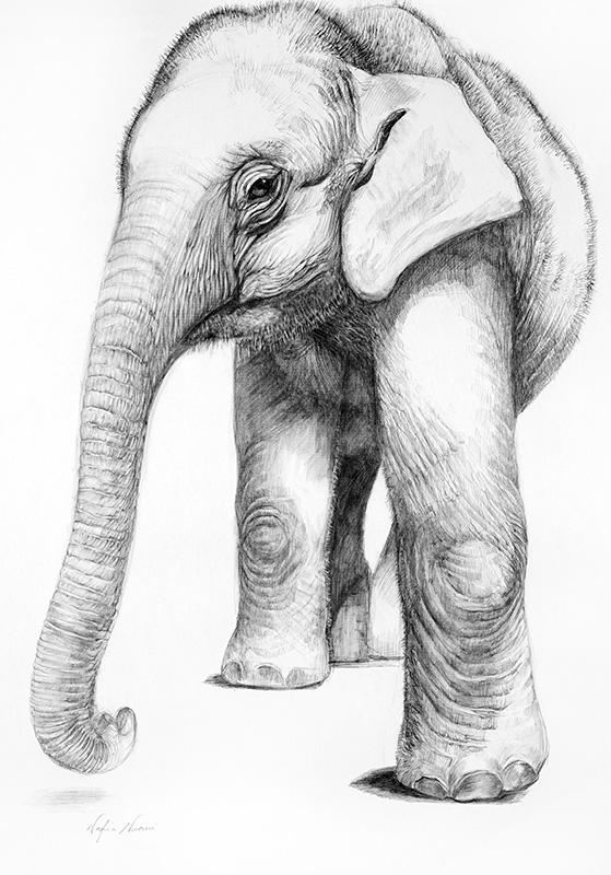 nafissa-elephant-17_0.jpg