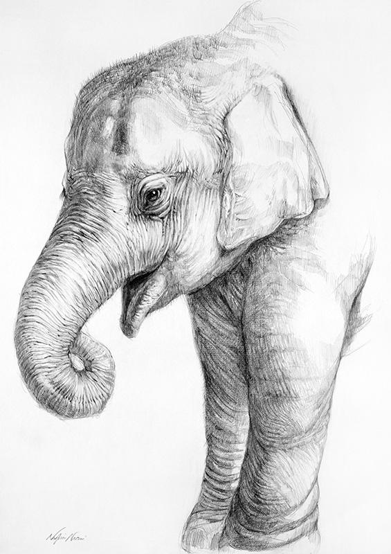 nafissa-elephant-18_0.jpg