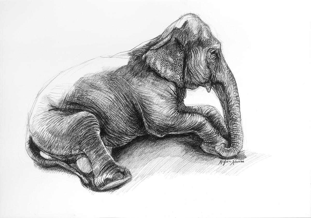 nafissa-elephant-18.jpg