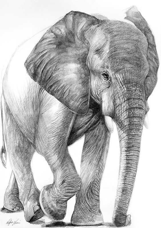 nafissa-elephant-19_0.jpg