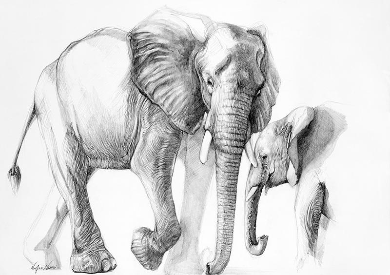 nafissa-elephant-20_0.jpg