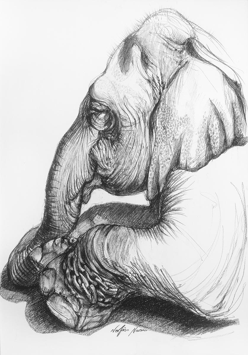nafissa-elephant-21.jpg
