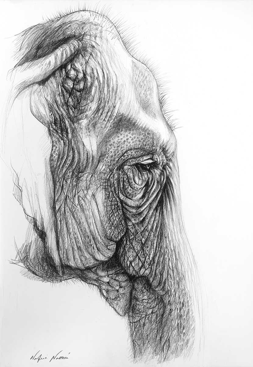 nafissa-elephant-22.jpg