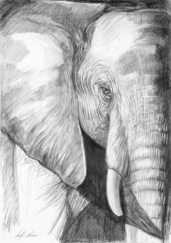 nafissa-elephant-22_0.jpg