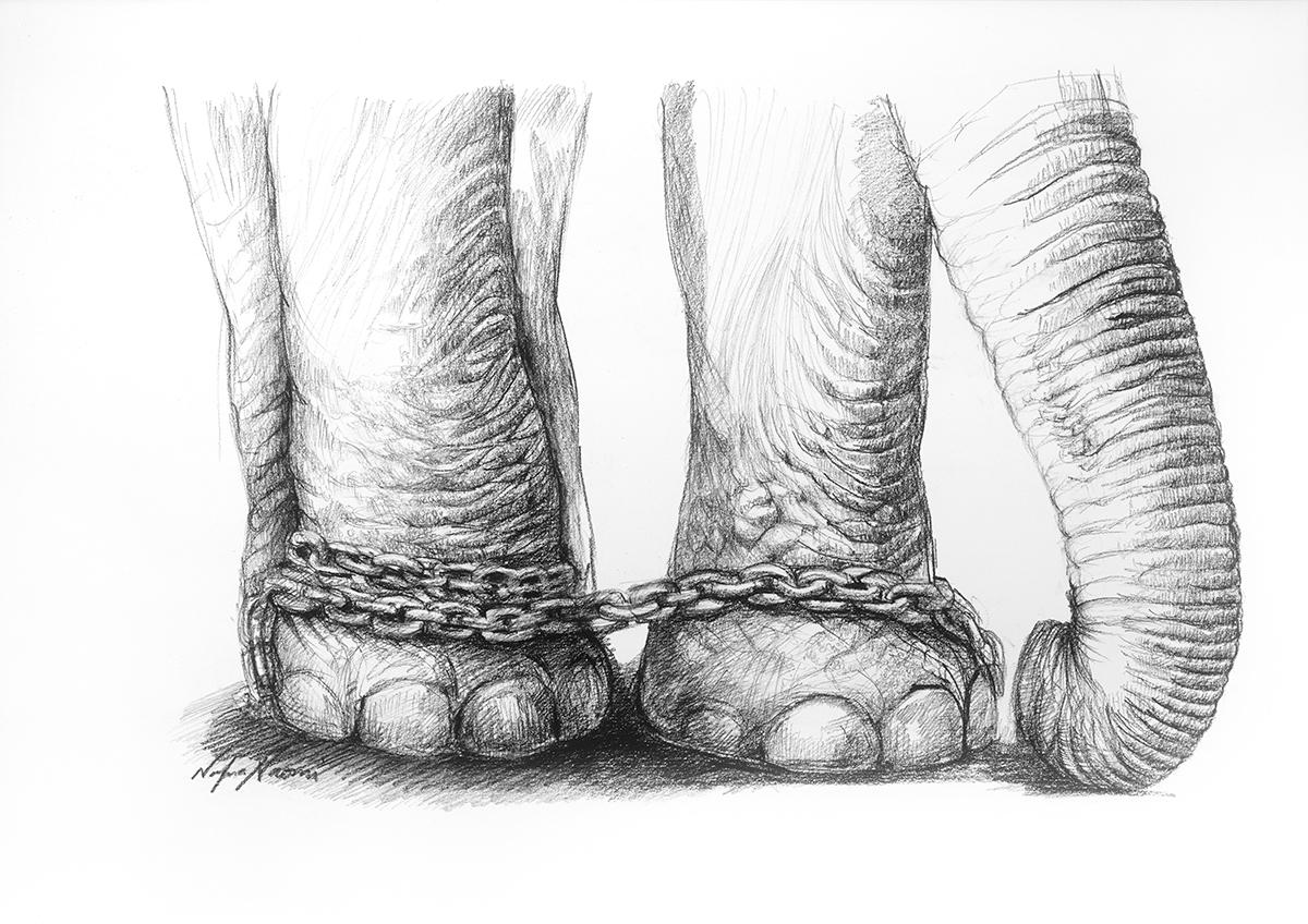 nafissa-elephant-23.jpg