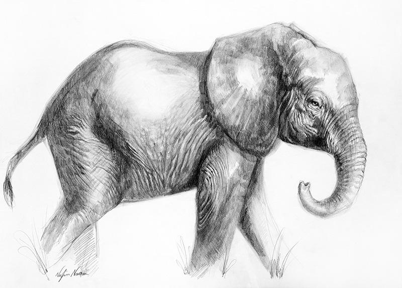 nafissa-elephant-26_0.jpg