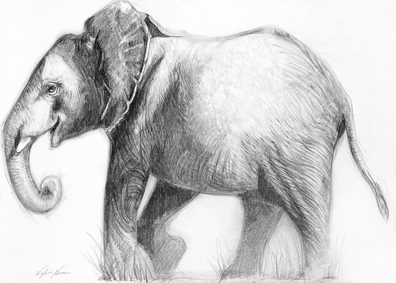 nafissa-elephant-28.jpg