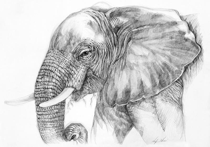 nafissa-elephant-29.jpg