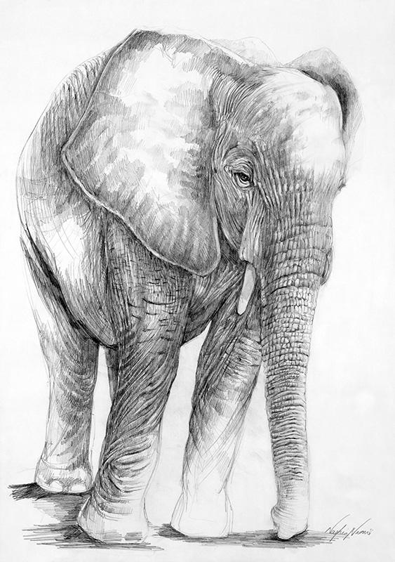 nafissa-elephant-31.jpg