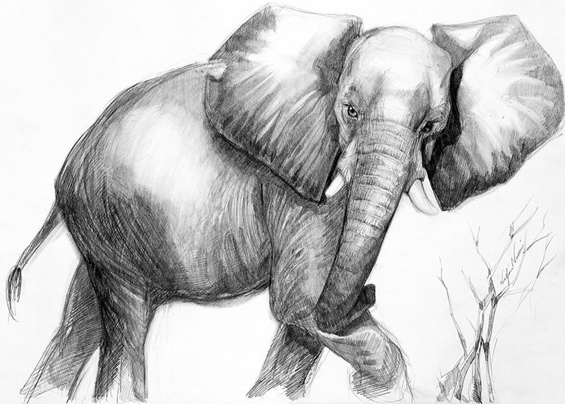 nafissa-elephant-33.jpg