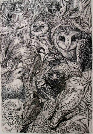 oz-birds-of-prey.jpg