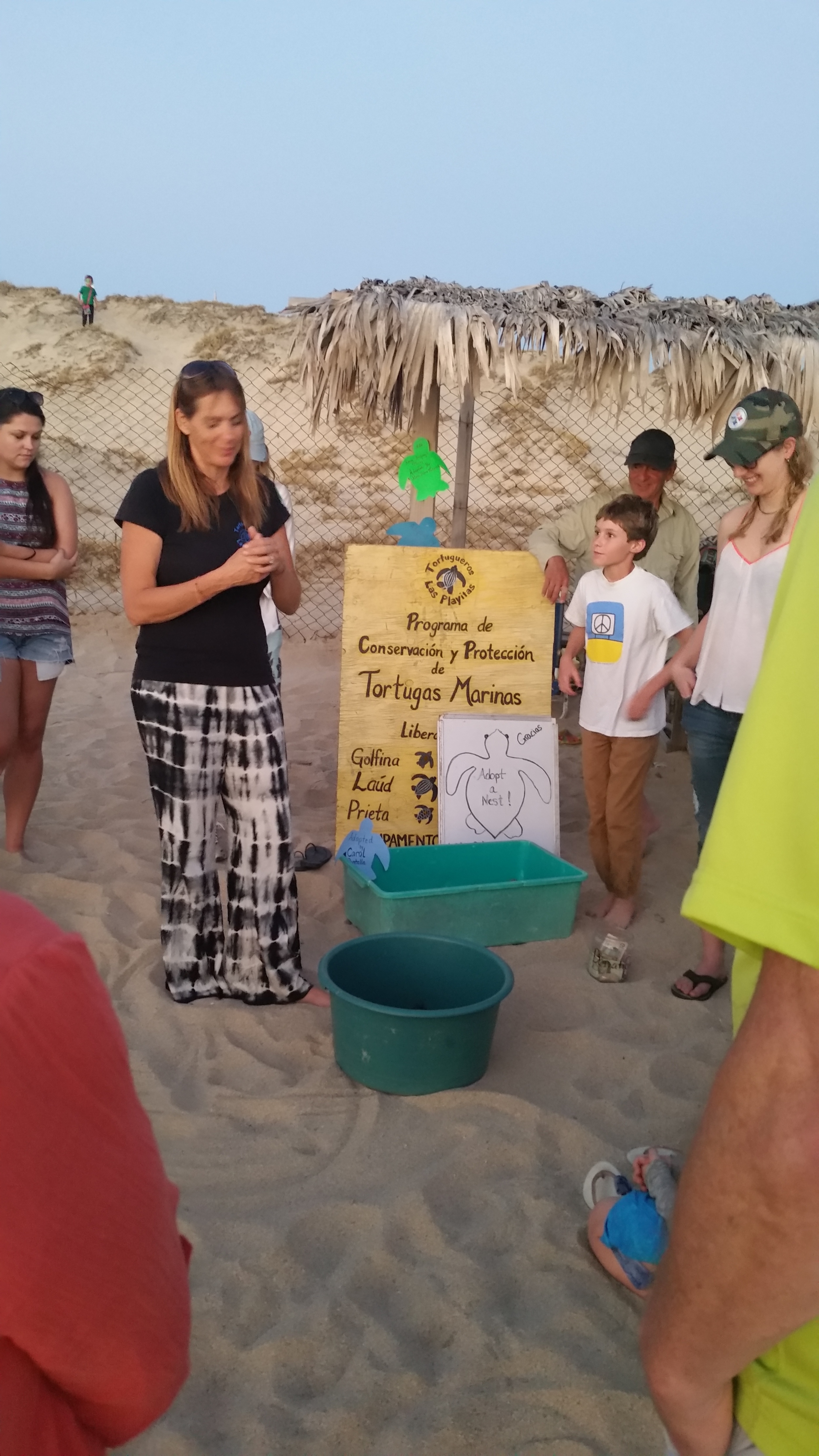 More Turtle Hatch