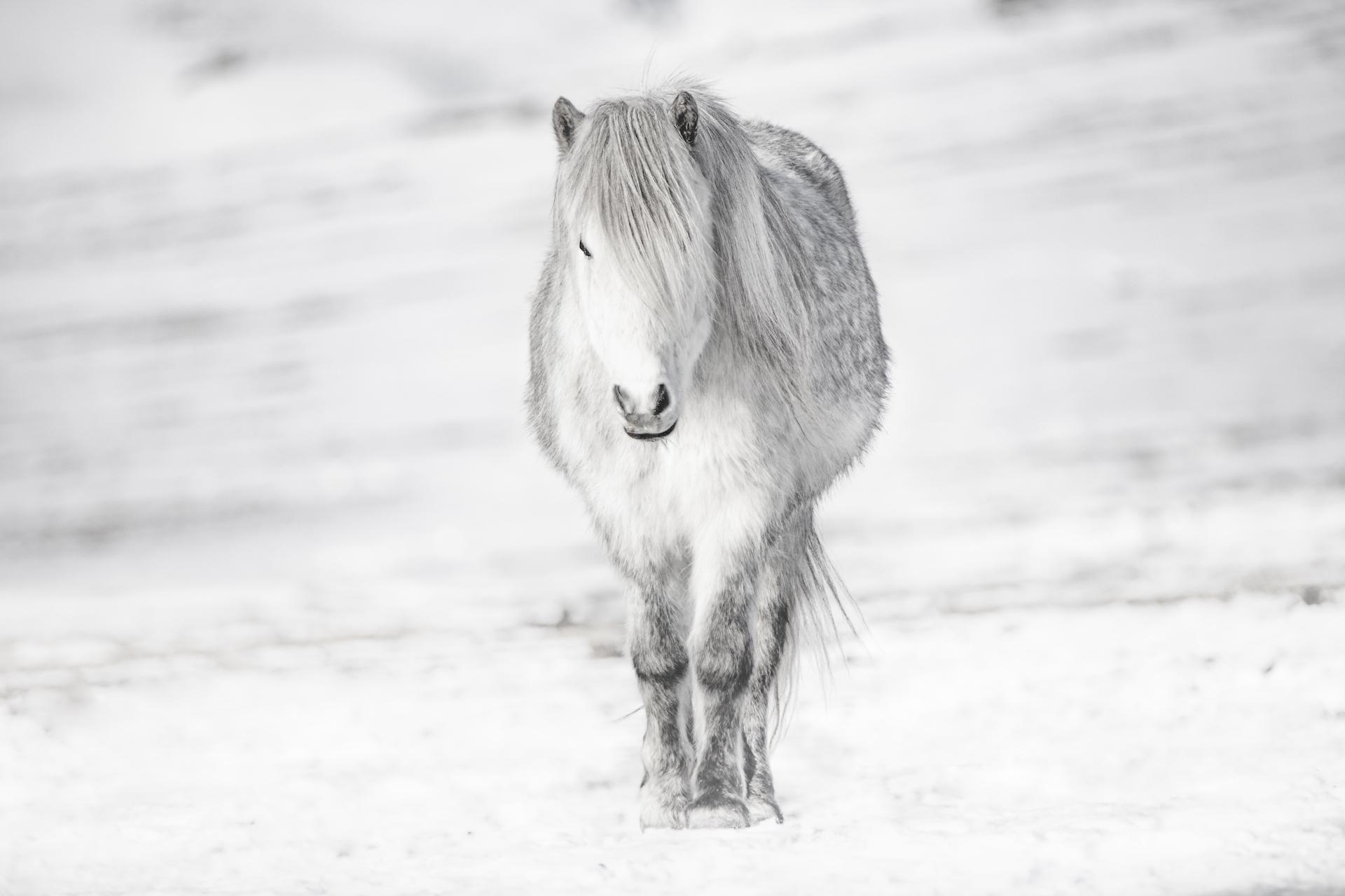 White on white - Iceland 2017