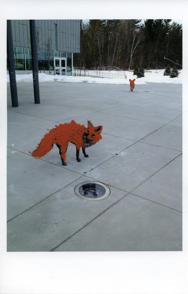 fox coat.jpg