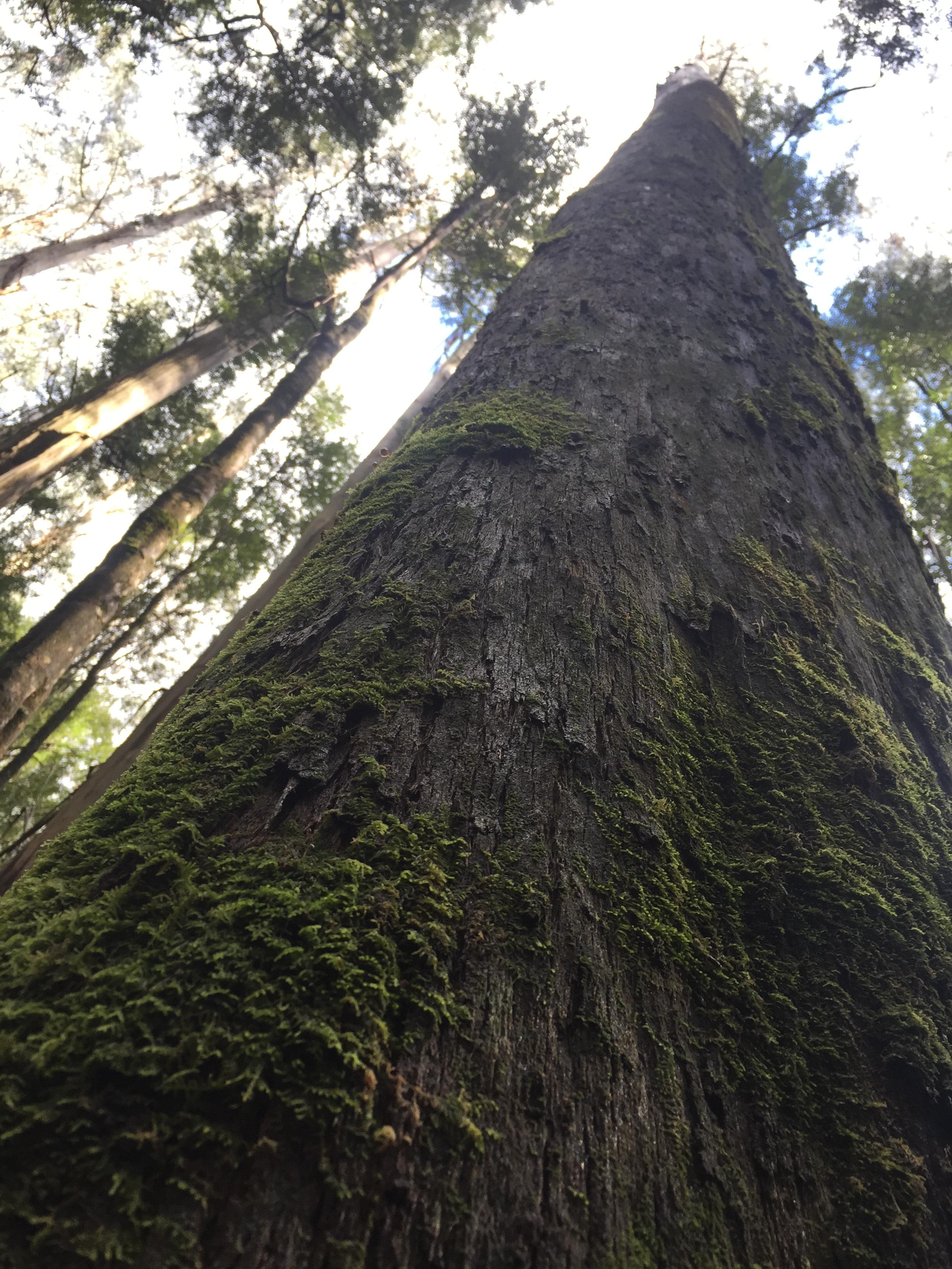 A beautiful Mountain Ash tree.