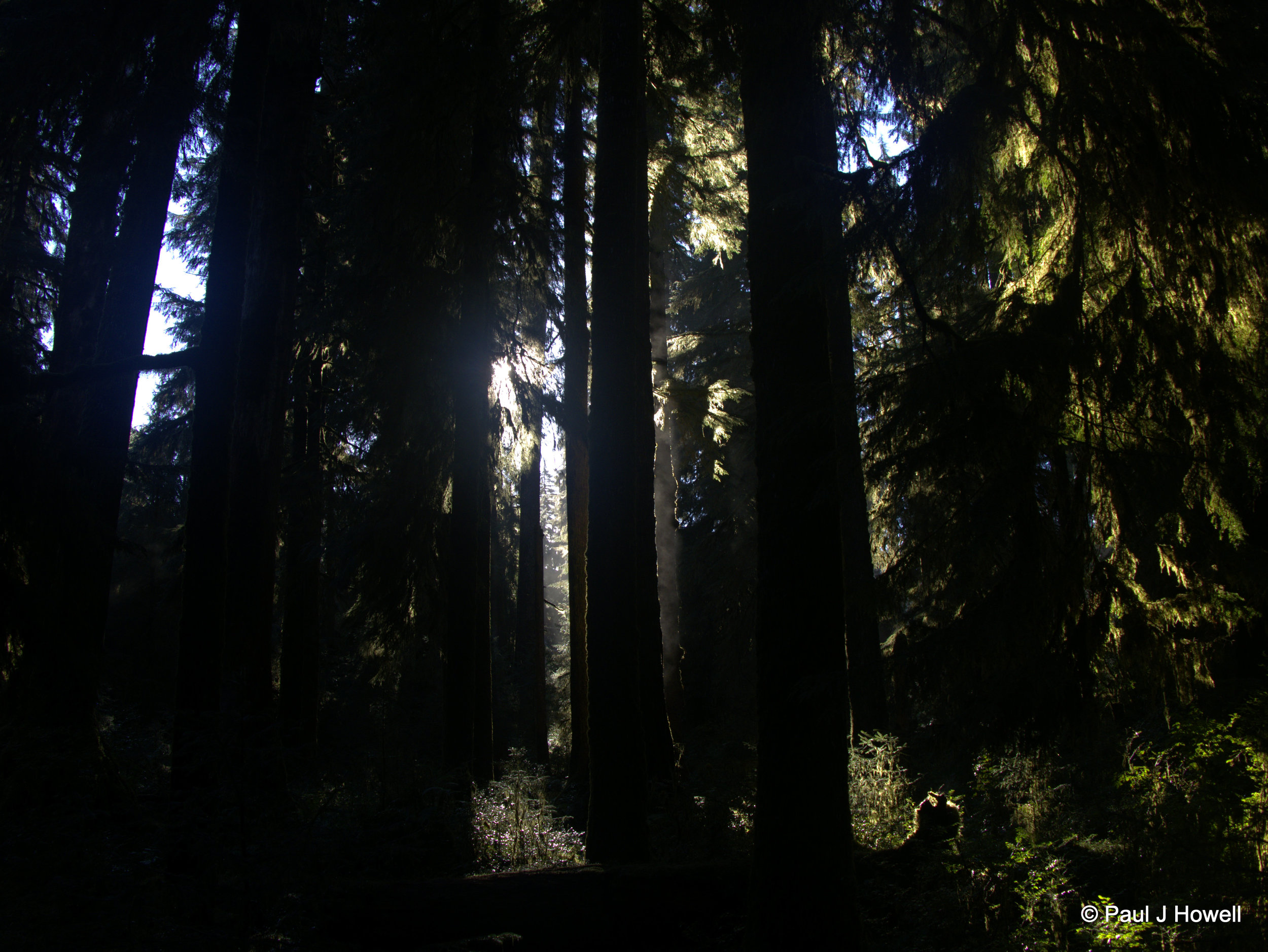 Hoh Rainforest - Penetrating Light