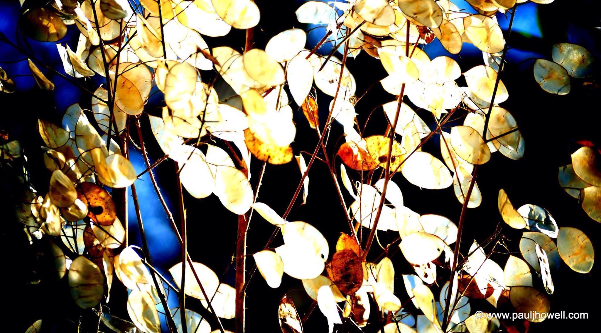 Sunseeds. Findhorn Garden. Moray, Scotland. March 2016.