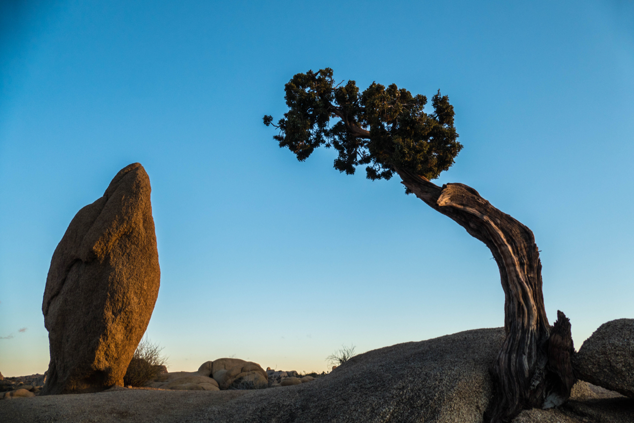 Red Rock and Juniper In Dialogue - Joshua Tree NP 2018 © Paul J Howell