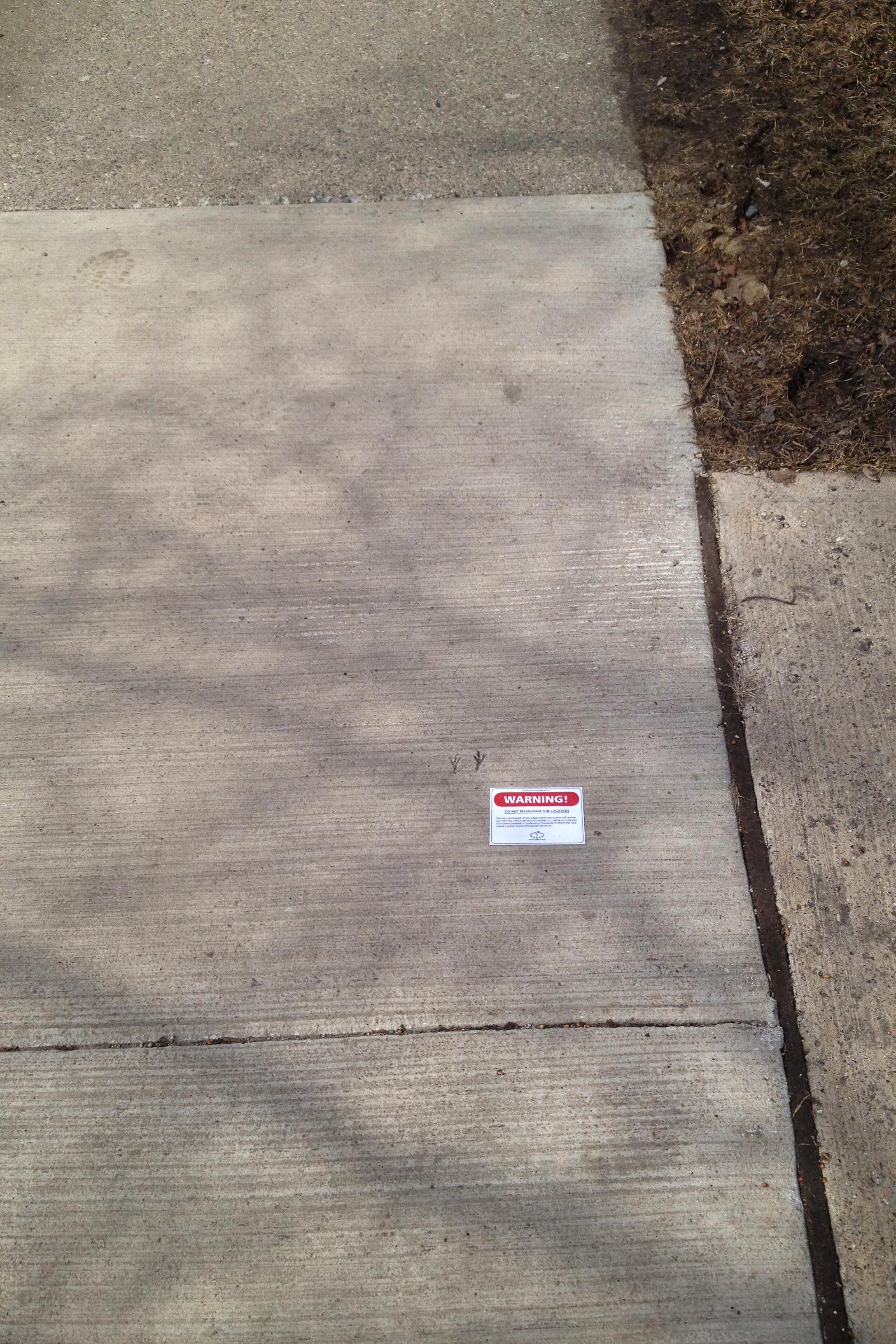 Bird Feet on Sidewalk (Ann & 5th Ave.)