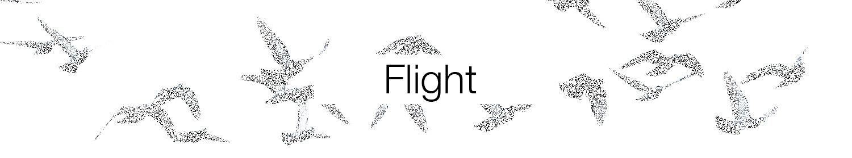 Flight header.jpg