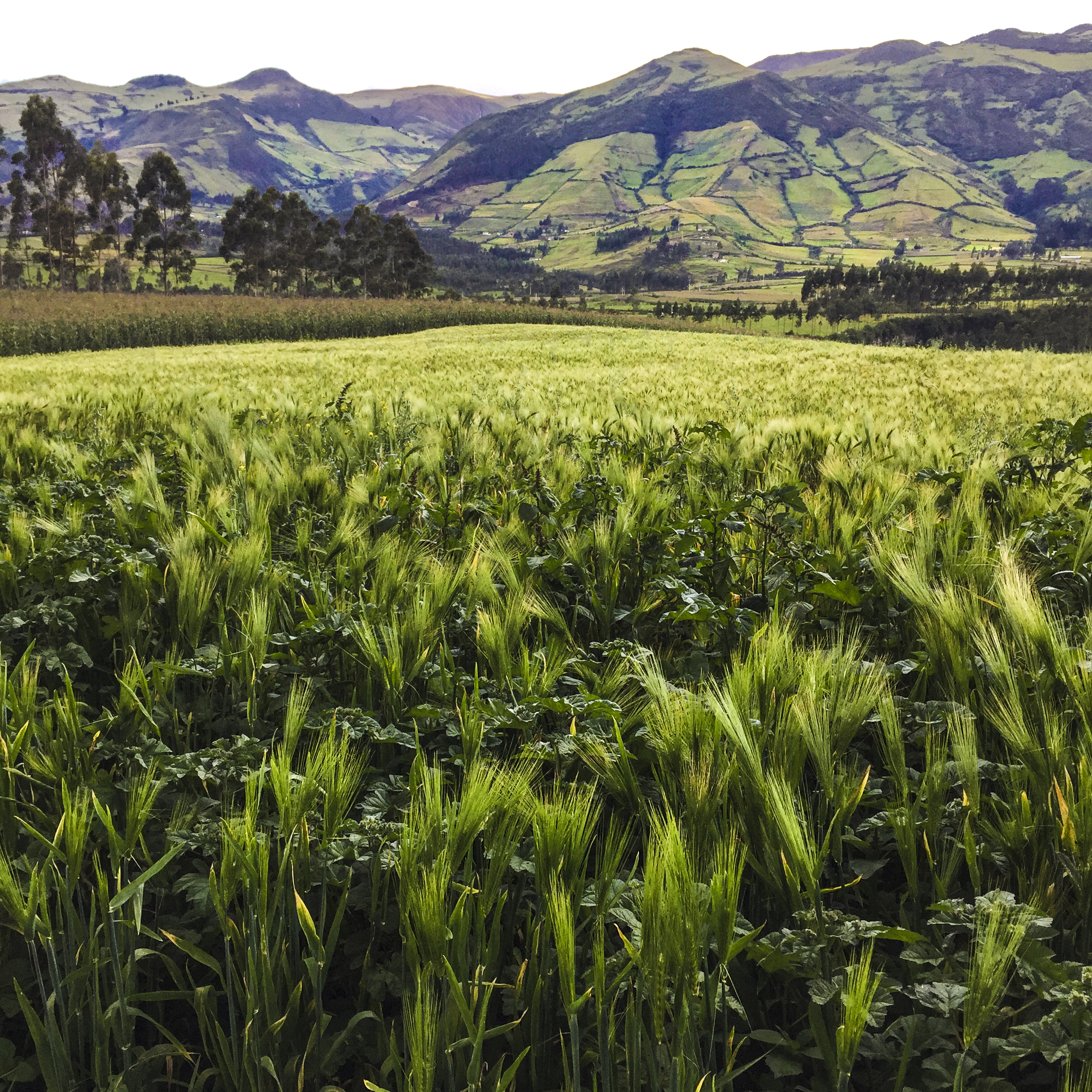 agritourism - Agritourism is the crossroads of tourism and agriculture where you can experience the farm lifestyle