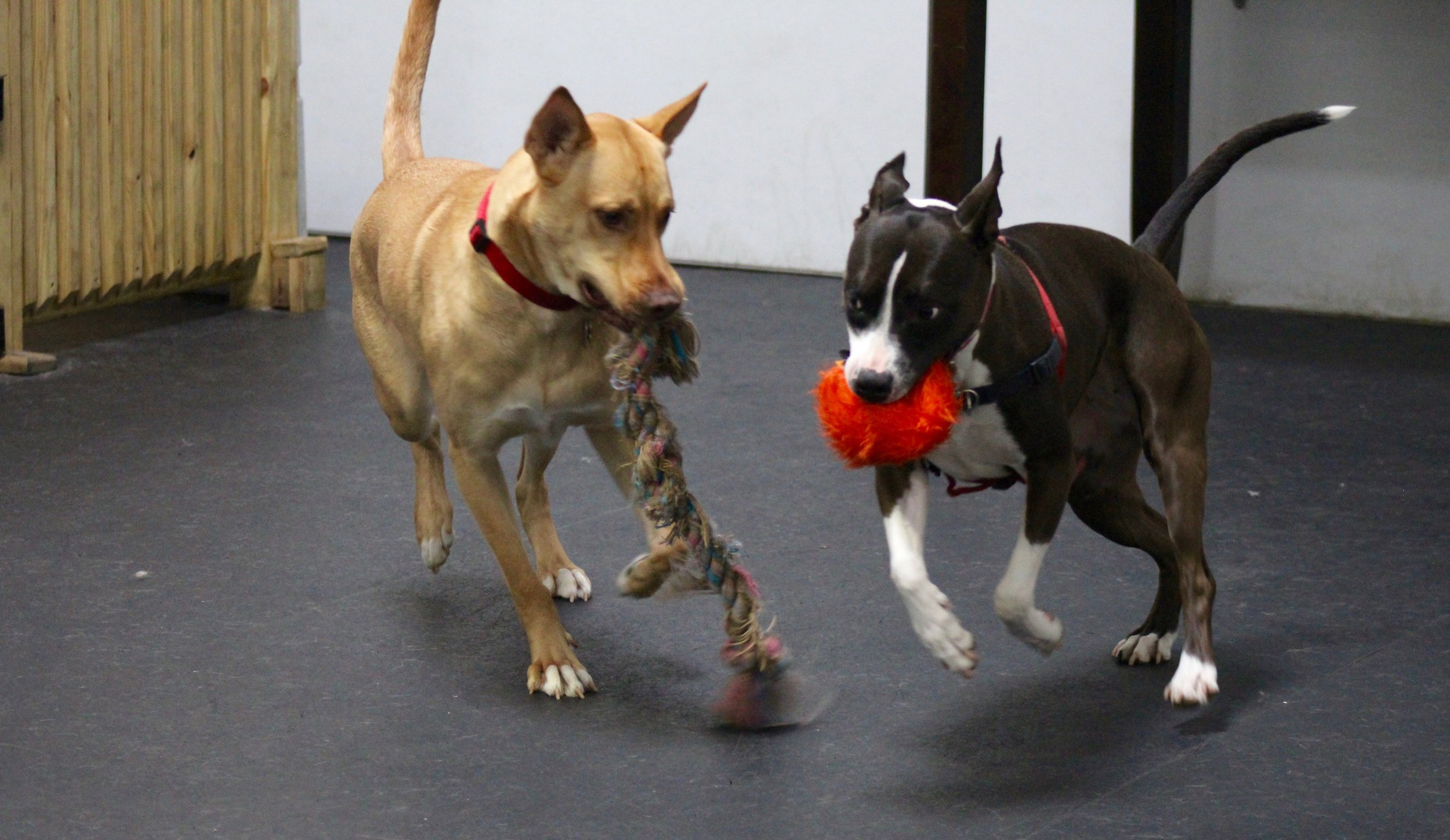 Play - Maxine & Crosby with Toys.jpg