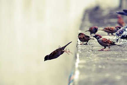 birds learning to fly.jpg