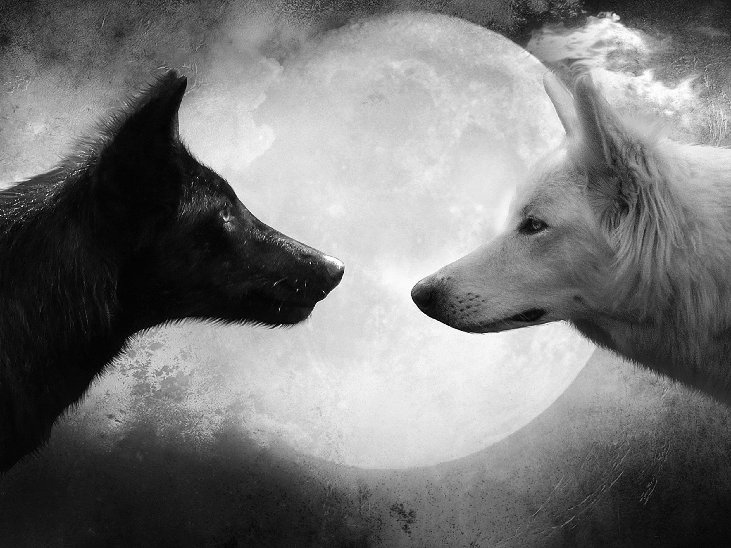 good-bad-wolf.jpg