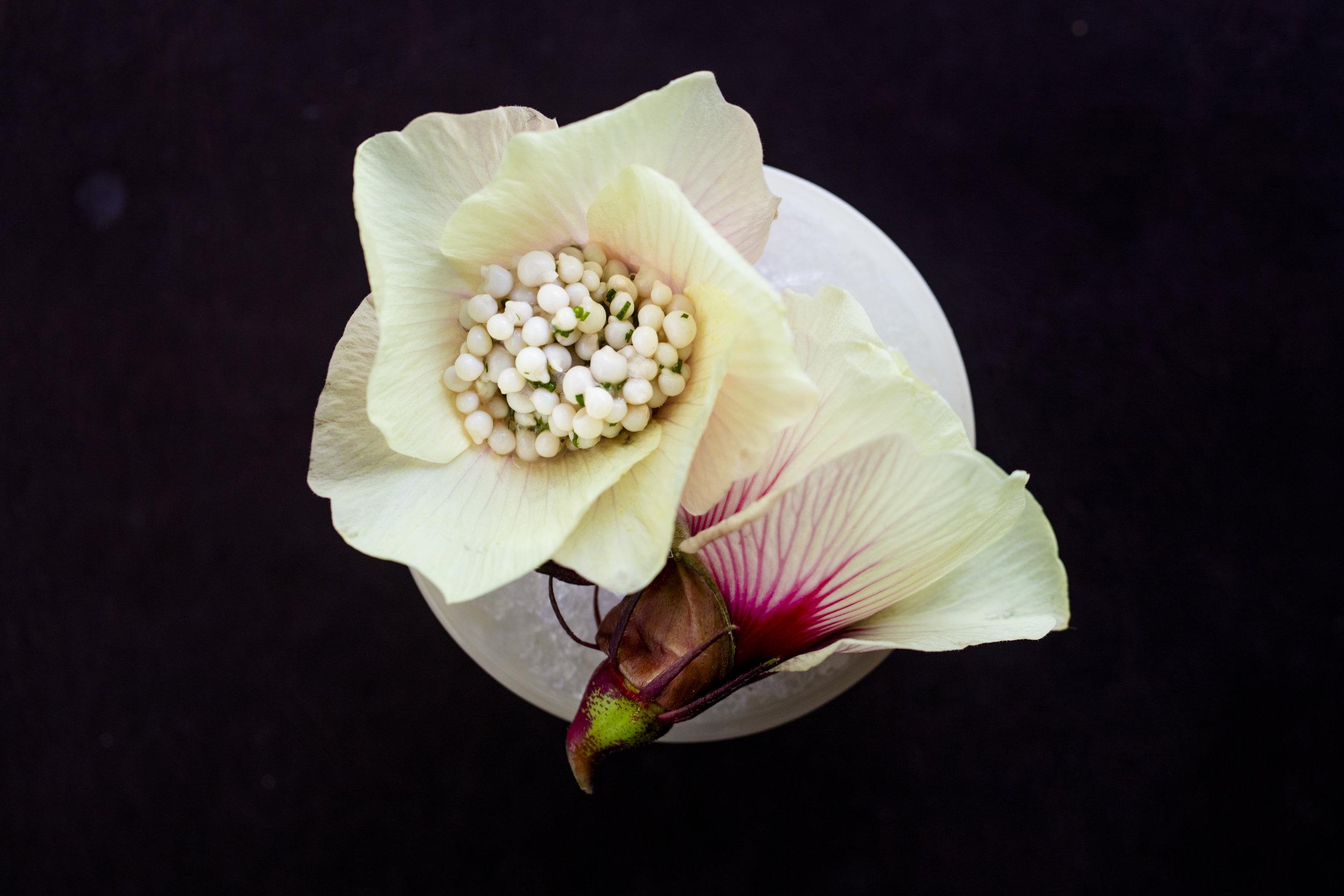 Okra seeds (1).jpg