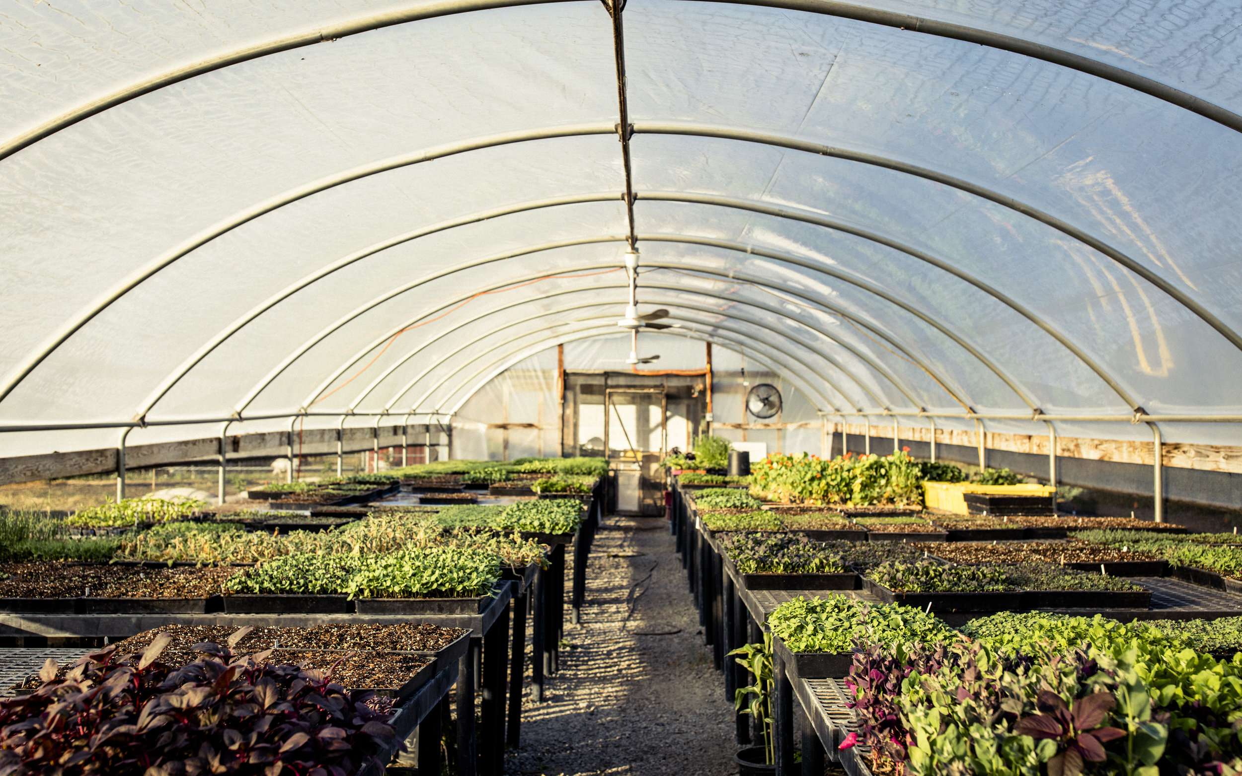Greenhouse (1).jpg